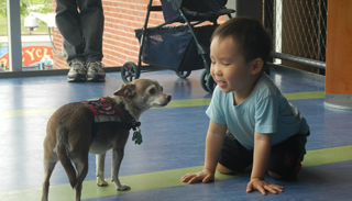Therapy Dogs at the Boston Children's Museum during Winter School Break