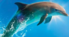 "Sensory Friendly ""Bernie the Dolphin"""
